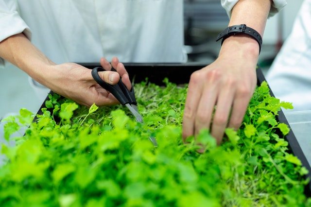 seo search agent trimming organic plant matter